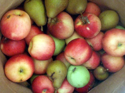 Консервирование яблок и груш