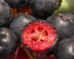 Плод аронии