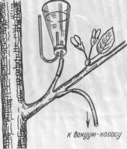 Введение химических веществ в деревья